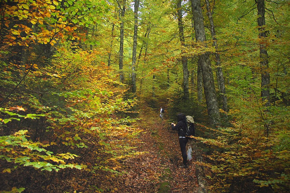Θεσπρωτία: Λαμπανίτσα | Εναλλακτικός εορτασμός του 15Αυγουστου στο ελατόδασος των 1.200 μ. υψόμετρο