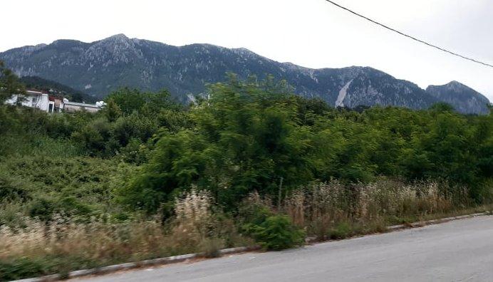 Θεσπρωτία: Γκρίνια για την «βλάστηση» στο κέντρο της πόλης της Παραμυθιάς